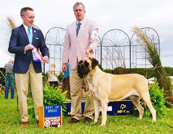Epiphany Mastiffs ~*~ Proud to be home of the Gentle Giants that are